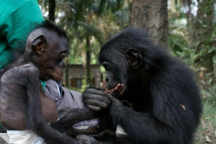 O santuário Lola Ya Bonobo, em Kinshasa. Imagem: Wikimedia Commons.