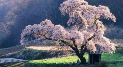10 imagens que farão você querer viajar para o Japão agora