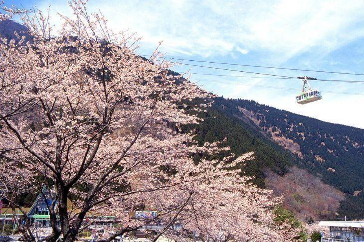 Japan Pics