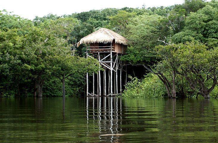 Resultado de imagem para onde hospedar amazonia