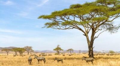 12 coisas que você precisa saber antes de fazer um safári na África