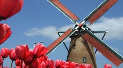 20 fotos fantásticas das lindas plantações de tulipas na Holanda