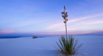 8 imagens e curiosidades sobre o White Sands no Novo México