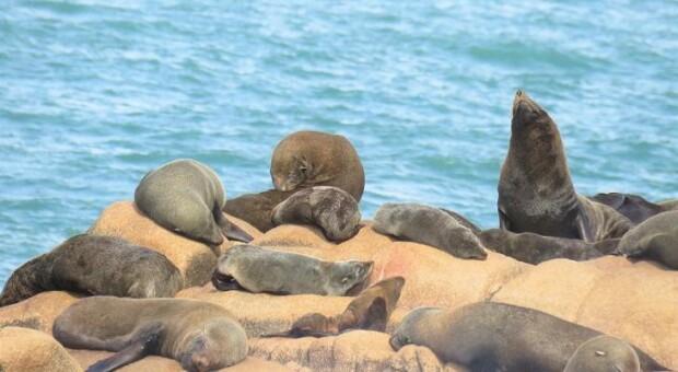 7 motivos para conhecer as belezas de Cabo Polônio