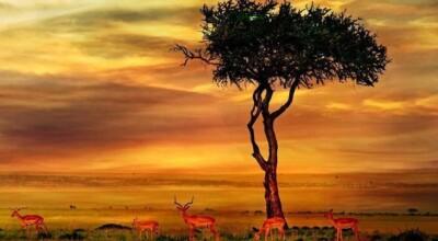 11 motivos para você querer visitar a África do Sul (e não ter mais vontade de voltar)