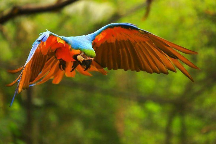 11 florestas mais incríveis do mundo confira lindas imagens