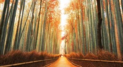 11 florestas mais incríveis do mundo: confira lindas imagens