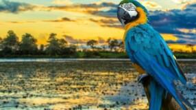 14 lugares imperdíveis para o viajante apreciar a vida selvagem