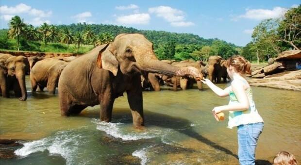 11 motivos para você conhecer o surpreendente Sri Lanka