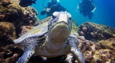 20 motivos para visitar o paradisíaco arquipélago de Ilha Grande
