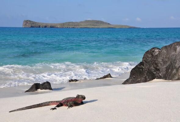 15 atrações imperdíveis para você conhecer em Galápagos