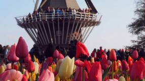 7 passeios imperdíveis em Keukenhof, o maior jardim de flores do mundo